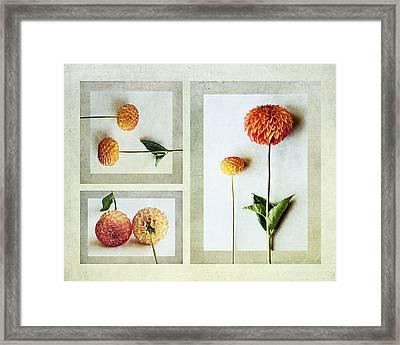 Dahlia Trip Framed Print