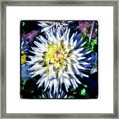 Framed Print featuring the photograph Dahling! You're Looking So Lovely by Mr Photojimsf