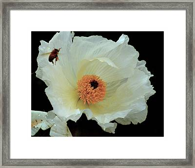 Framed Print featuring the photograph Daily Grind.. by Al Swasey
