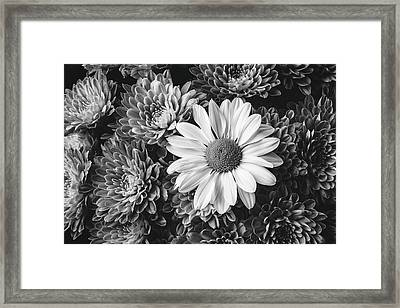 Daily In Pompons Framed Print