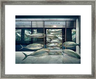 Daily Sardine Framed Print by Andrew Kow