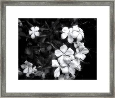 Dainty Blooms - Black And White Photograph Framed Print by Ann Powell