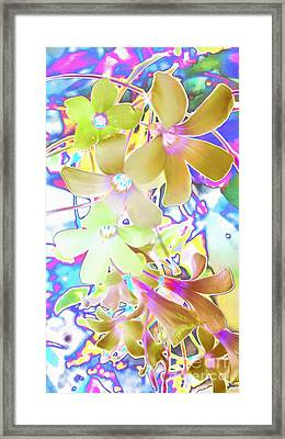 Dainty Bloosoms Framed Print