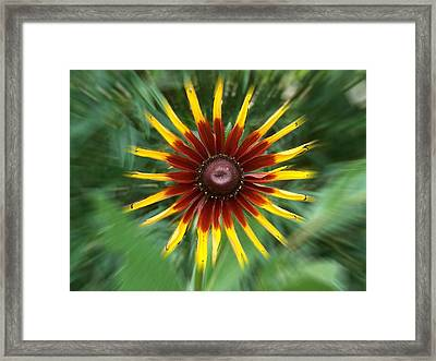 Dainty Daisy Framed Print by David and Lynn Keller