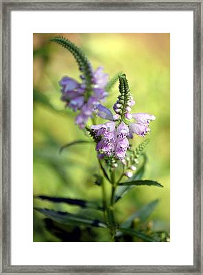 Framed Print featuring the photograph Dainty Floral by Elsa Marie Santoro