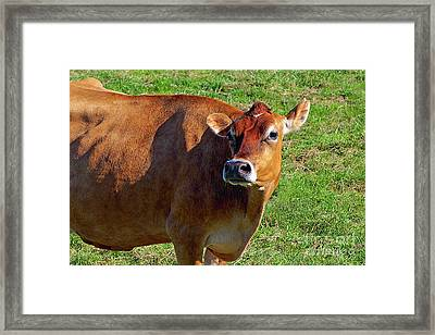 Dairy Cow 2 Framed Print