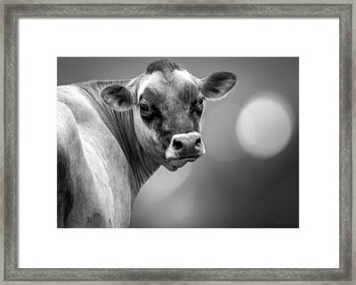 Dairy Cow Elsie Framed Print by Bob Orsillo