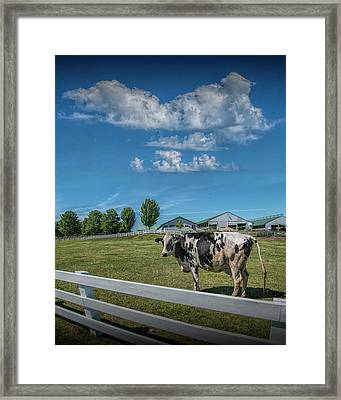 Dairy Cow In A Pasture In West Michigan Framed Print by Randall Nyhof