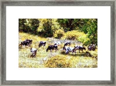 Dairy Cows In A Summer Pasture Framed Print by Janine Riley