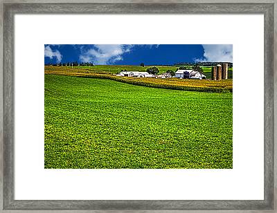 Dairy Farm Dane County Wisconsin Framed Print