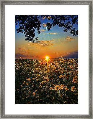 Daiseyland Framed Print by Phil Koch