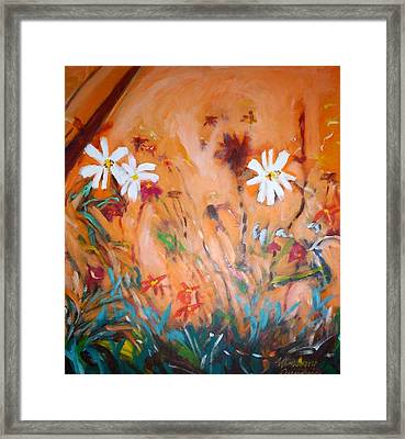 Daisies Along The Fence Framed Print