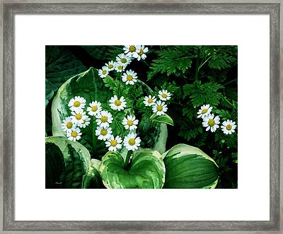 Daisies And Hosta In Colour Framed Print