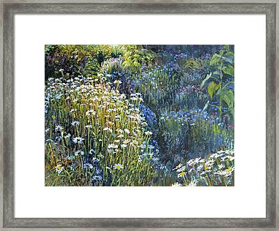 Daisies And Shades Of Blue Framed Print