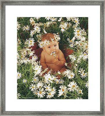 Daisies Framed Print by Anne Geddes