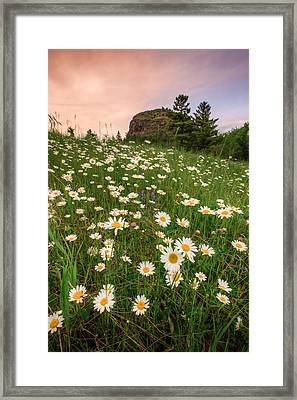 Daisies At Mt Mckay Framed Print