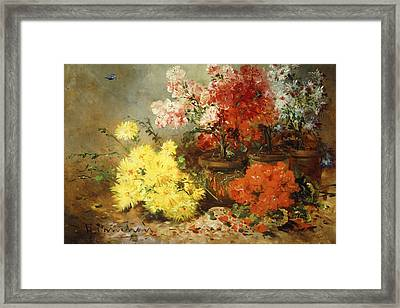 Daisies, Begonia, And Other Flowers In Pots Framed Print