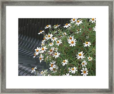 Daisies By The Bench Framed Print by Sylvia Wanty