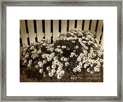 Daisies By The Fence By Kaye Menner Framed Print