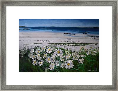 Daisies Connemara Ireland Framed Print