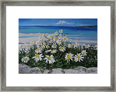 Daisies Coral Strand Connemara Framed Print by Diana Shephard