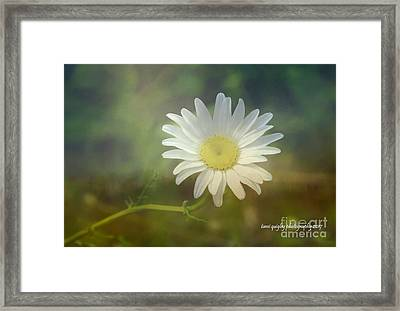 Daisies Don't Tell Framed Print