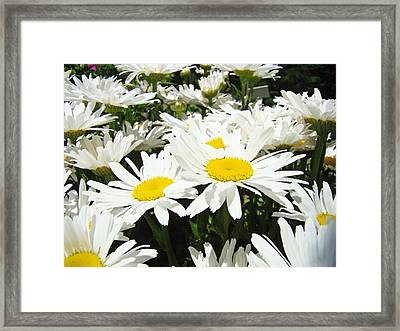 Daisies Floral Landscape Art Prints Daisy Flowers Baslee Troutman Framed Print by Baslee Troutman