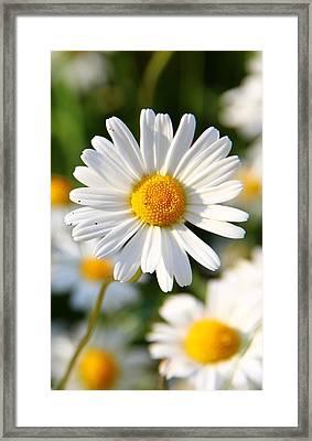 Daisies Flowers Field Blurriness 107162 800x1280 Framed Print