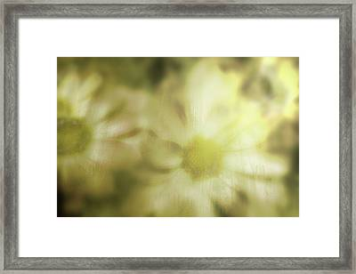 Framed Print featuring the photograph Daisies by Gray  Artus