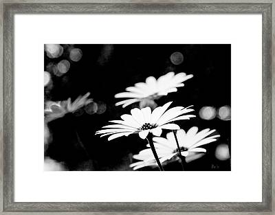 Daisies In Black And White Framed Print