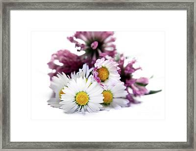 Daisies In Clover Framed Print by Terri Waters