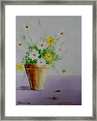 Daisies In Pot Framed Print by Jamie Frier