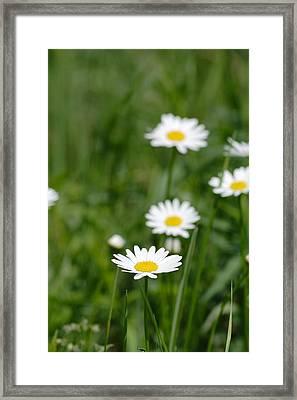 Daisies Framed Print by Jeff VanDyke