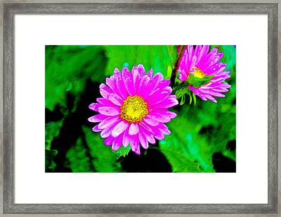 Daisies Framed Print by L Brown