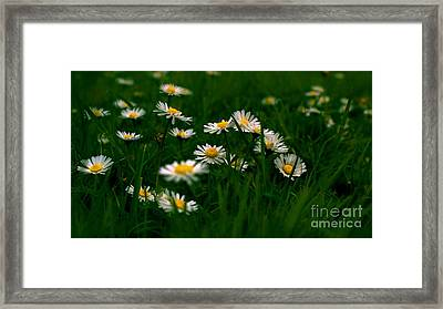 Daisies Framed Print by Louise Fahy