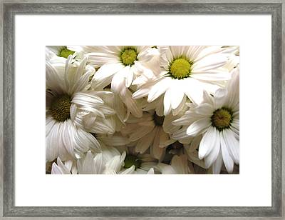 Daisies Make Me Smile Framed Print by Laura  Grisham