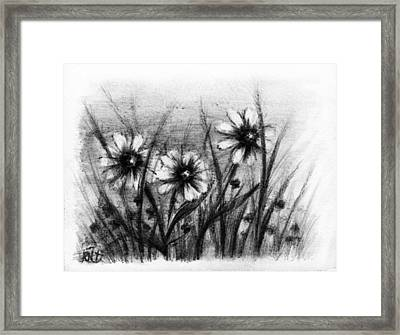 Daisies Framed Print by Rachel Christine Nowicki