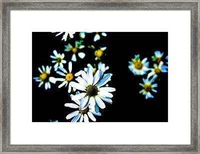 Daisies Framed Print by Grebo Gray
