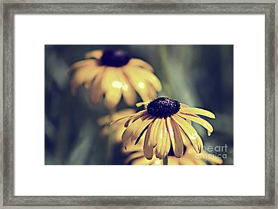 Daisies Wild Flowers Framed Print
