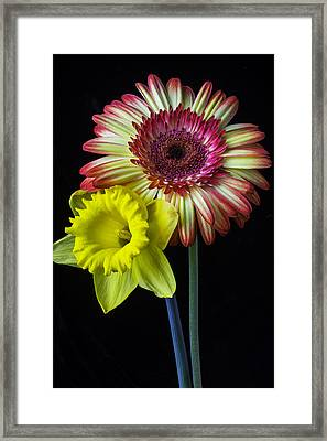 Daisy And Daffodil Framed Print by Garry Gay