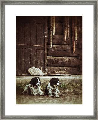 Daisy And Poppy Framed Print