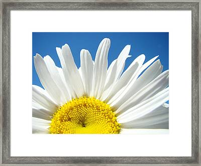 Daisy Art Prints White Daisies Flowers Blue Sky Framed Print by Baslee Troutman