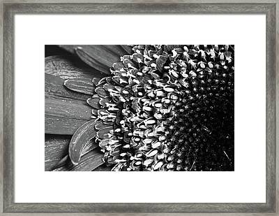 Daisy Art Framed Print