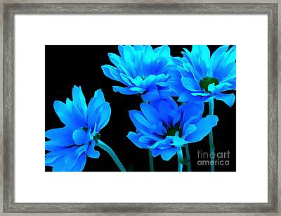 Daisy Blues Framed Print by Krissy Katsimbras
