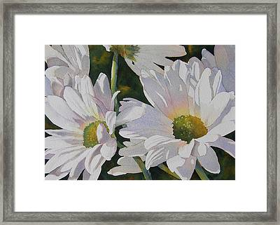 Daisy Bunch Framed Print