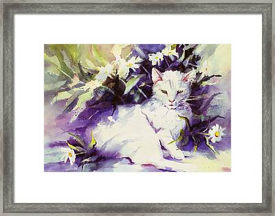 Daisy Cat Framed Print