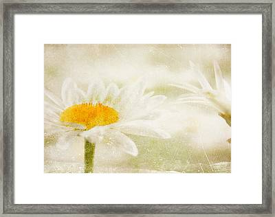 Daisy Framed Print by Catherine Alfidi