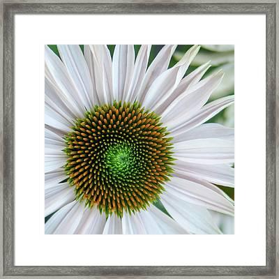 Daisy Center Framed Print