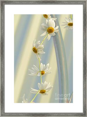 Daisy Chain Framed Print