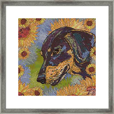 Daisy Dachsie And The Sunflowers Framed Print by Lotti Brown